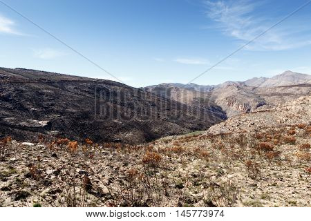 Life After Fire - Swartberg Nature Reserve