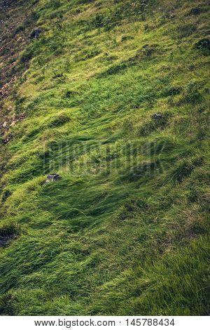 beautiful green mountain grass background