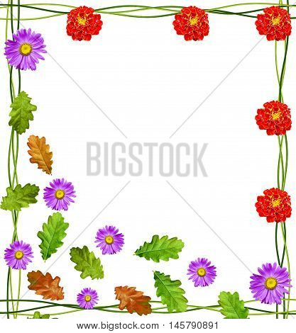 foliage isolated on white background. Frame from stem nasturtium. flower