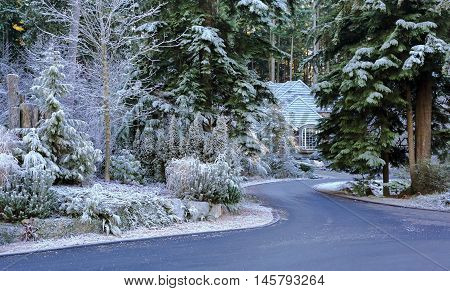 Christmas House and Snow covered forest around