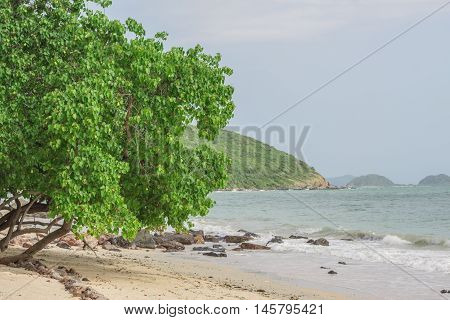 Trees Along The Beach.