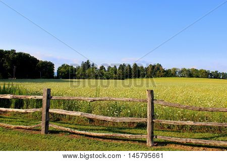 Beautiful open field near Linn Run State Park in  Pennsylvania