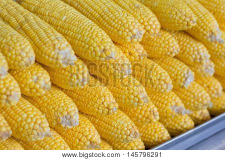 Pattern Of Yellow Corn.
