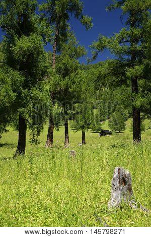 Altai Mountains Natural Park - UNESCO Natural Monument, Siberia, Russian Federation