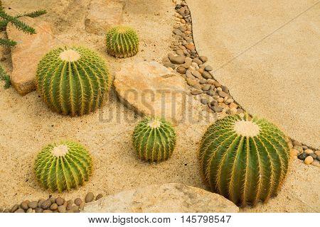 Cactus desert in the dome farm, Garden cactus.