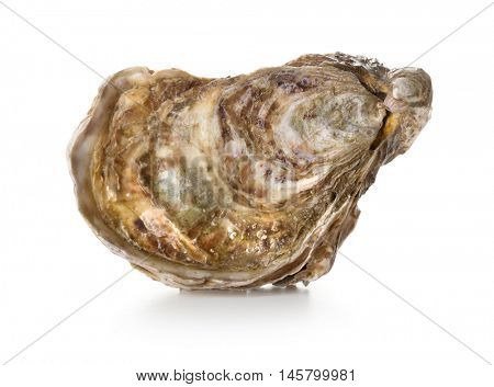 Fresh oyster on white background