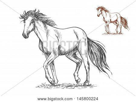 Running white horse pencil sketch portrait. Mustang with stamping hoofs gait and wavy tail on lawn
