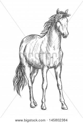 Beautiful white horse standing. Pencil sketch portrait of stallion with wavy mane, tail, hoofs