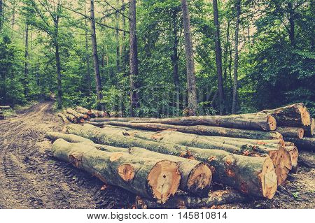 Pile of wood in the forest by the road vintage photo.
