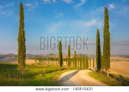 Cypresses Trees and ground road at the morning - real nature, Tuscany landscape, Italy, European countryside travel