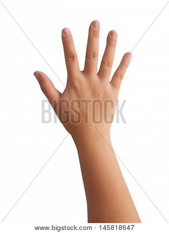 woman hands isolated on a white background.