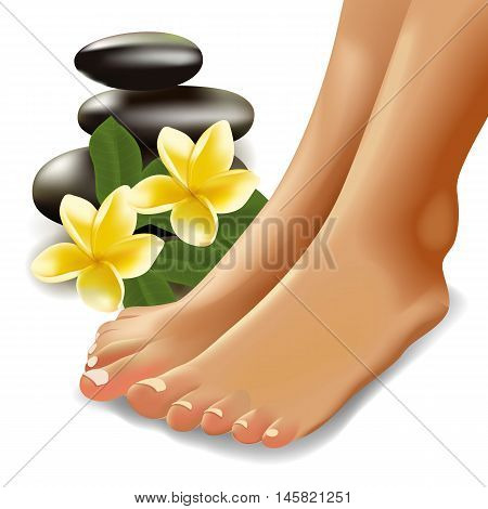 Vector illustration of SPA concept with realistic female feet, frangipani and stones.