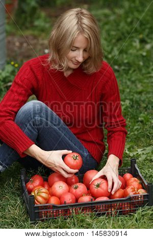 Woman Inspecting A Tomato