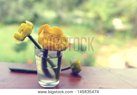 bouquet of yellow water lily. Spatter dock