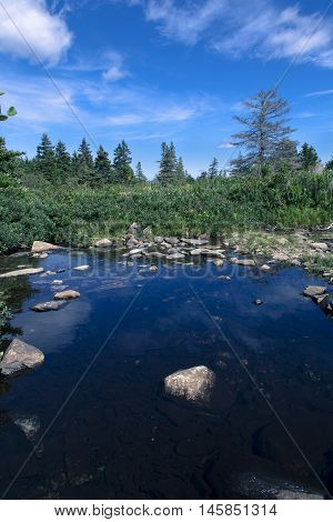 Stream in boreal forest on a sunny day near Cupid's Haven, Newfoundland and Labrador