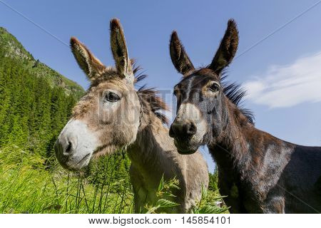 Black and White. Two donkeys best friends. Abstract multicultural friendship stories.