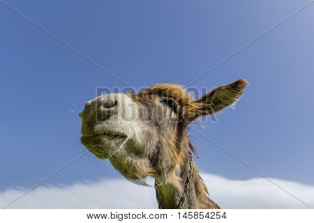 Donkey head against blue sky with clouds