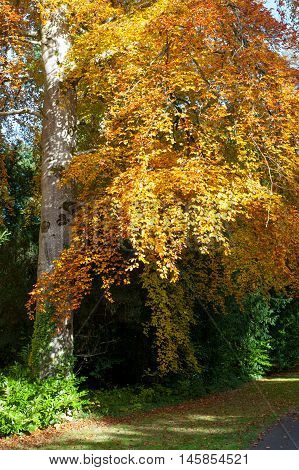 Beautiful Autumn Tree on a sunny day