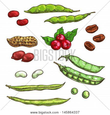Nuts, kernels and berries isolated icons. Vector sketch elements of plants seeds, coffee beans, pea pod, bean, berries, cranberry