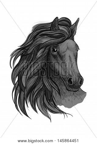 Black horse with passionate glance portrait. Beautiful mustang with wavy mane and bent head