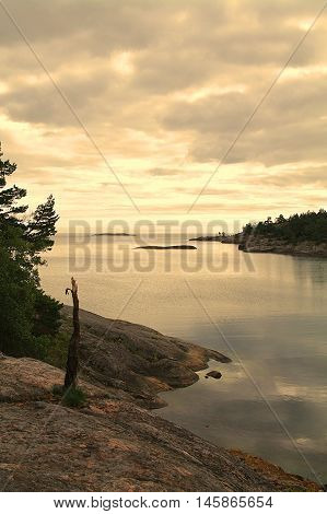 A seascape photo with a stumpy tree in the forground on a cliff and cloudy sky above