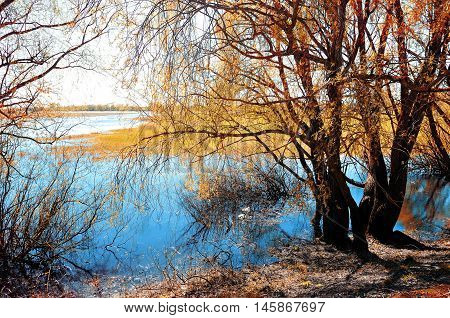 Sunny autumn landscape- autumn willow tree under sunshine on river bank at autumn sunset. Autumn rural landscape with picturesque autumn nature and autumn trees near river. Autumn landscape view.