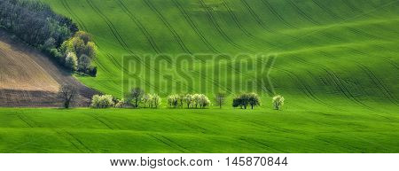 panoramic view of the field waves with blossoming trees, South Moravia, Czech Republic