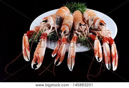 Four Big Delicious Raw Langoustines with Rosemary on White Plate closeup on Dark Wooden background