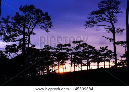 Sunset in the mountains with pine trees at Phu Soi Dao, Uttaradit, Thailand.