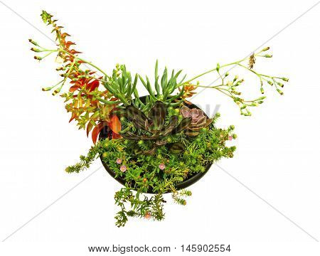 Succulents in a planter on a white background