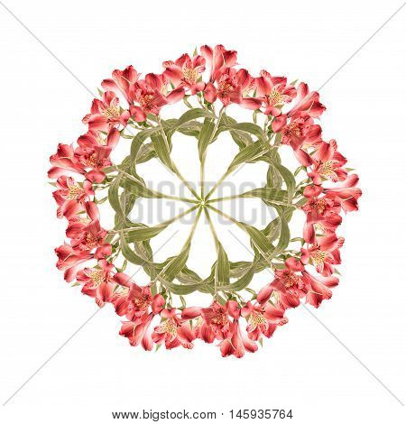 Montage of alstroemeria flowers stems and leaves arranged in circular pattern. Isolated on white.