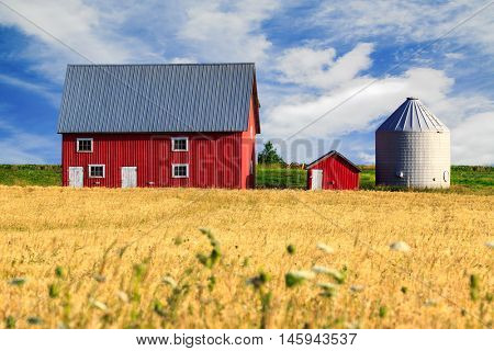 Red barn and a field of summer wheat.