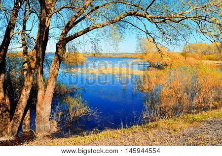 Autumn evening -colorful autumn view of yellow autumn trees. Autumn landscape - yellow autumn willows near blue river. Sunny picturesque autumn view of autumn nature.