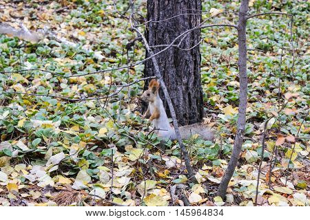 A squirrel stands on its hind legs in the forest