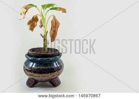 Ornamental dying on a white background on isolated object