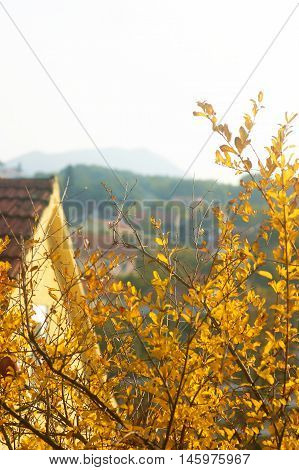 Tree with yellow leaves on the background of the house roof