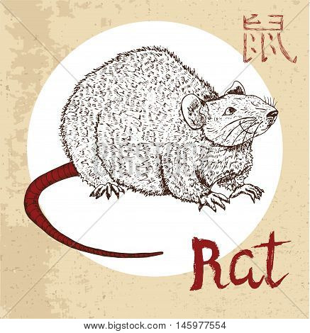 Chinese zodiac symbol of hand drawn rat or mouse with lettering. Horoscope and astrological vector sign of asian new year calendar. Graphic drawing with engraved animal. Chinese hieroglyph means Rat