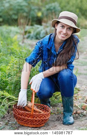 Gardener with freshly harvested carrots in garden. Woman with a basket with healthy fresh organic carrots. Harvest. Happy woman with carrots