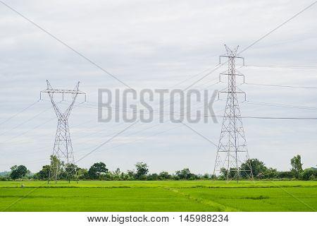 Power pole in a field of green in morning sun