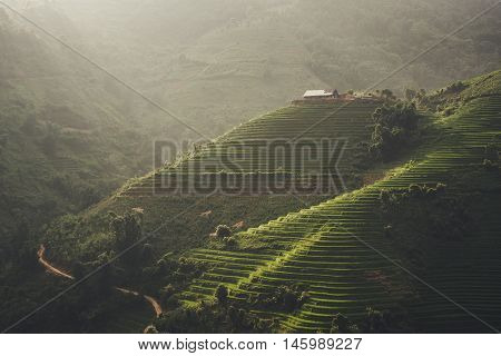 Sunset and Agriculture Green Rice fields and rice terraced on mountain at SAPA Lao Cai Mu Cang Chai Vietnam. The most of area is rice terraced. nature and landscape rice fields