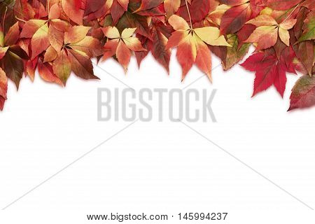 Autumn background colorful leaves isolated on white background with copy space