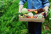 The farmer holds in his hands a wooden box with a crop of vegetables and harvest of root on the background of the garden. Fresh and organic food. poster
