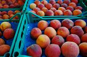 Fresh ripe plums in boxes in whole sale market ready for retail poster