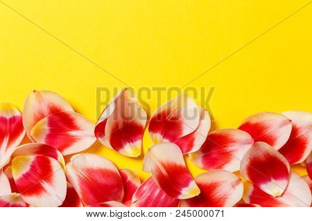 Feminine Stylish Mock Up With Tulip Flower, Petals. Copy Space For Your Design, Weddings, Invitation