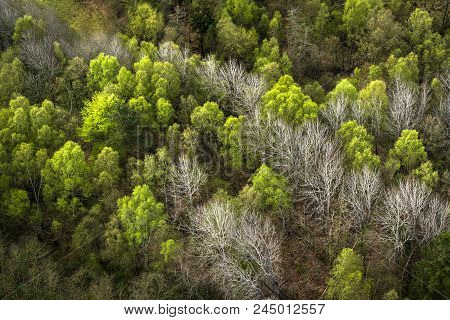Forest Seen From Above With Green And White Trees In The Spring