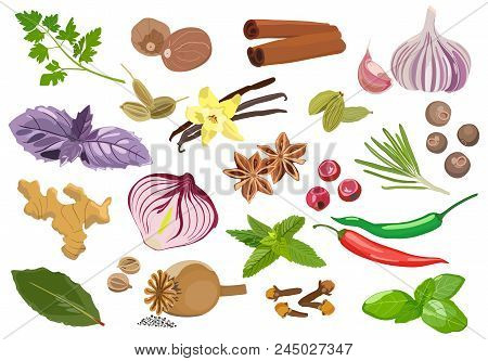 Vector Set Of Spices And Seasonings Red Chili Peppers, Bay Leaves, Garlic, Basil And Other Spices On