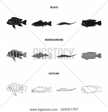 Frontosa, Cichlid, Phractocephalus Hemioliopterus.fish Set Collection Icons In Black, Monochrome, Ou