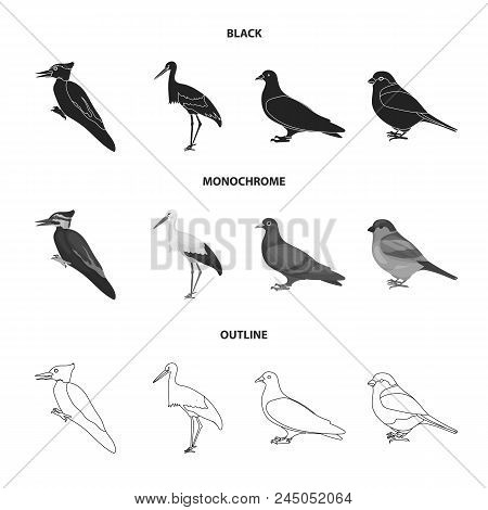 Woodpecker, Stork And Others. Birds Set Collection Icons In Black, Monochrome, Outline Style Vector