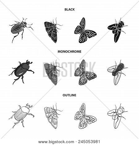 Arthropods Insect Beetle, Moth, Butterfly, Fly. Insects Set Collection Icons In Black, Monochrome, O