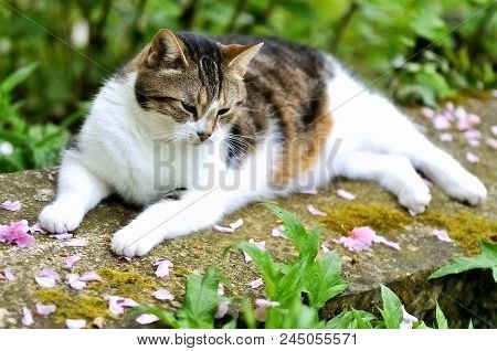 In The Thick Of It: White Tabby Cat Laying On A Stone Bench Surrounded By Pink Flower Petals In A Fr